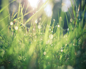 gratitude grass